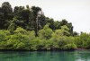 India - Andaman islands - Wandoor Marine Park: mangrove (photo by G.Frysinger)