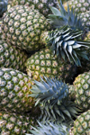 Costa Rica - Alajuela province: pineapples at a Costarican market - Ananas sativus - photo by H.Olarte