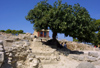 Crete, Greece - Knossos palace (Heraklion prefecture): under the shade of a fig tree (photo by A.Dnieprowsky)