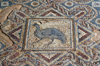 Kourion - Limassol district, Cyprus: bird - mosaic in the baths of the Kourion Ancient City - complex of Eustolios - photo by A.Ferrari