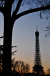 Paris, France: tree and Eiffel Tower silhouettes at dusk - view from Les Invalides - photo by M.Torres