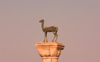 Greece - Rhodes island - Rhodes city - Mandraki Harbour - column at the entrance - female deer - photo by A.Dnieprowsky