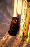 Italy - Murano (Veneto): a black cat enjoys the sunset - photo by W.Schipper