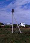 Courland spit, Kaliningrad Oblast, Russia: stork nest on a telephone pole - photo by A.Harries