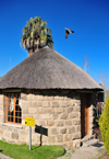 Maseru, Lesotho: Lancer's Inn - sandstone, wood and thatch roundavel chalet - Pioneer Road - pigeon in flight - photo by M.Torres
