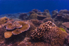 Sipadan Island, Sabah, Borneo, Malaysia: Big Coral garden on South Point - reef in the Celebes Sea - photo by S.Egeberg