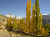 Duikar hamlet, Altit - Northern Areas, Pakistan: trees and the Hunza valley - photo by D.Steppuhn