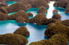 Rock Islands / Chelbacheb, Koror state, Palau / Belau: aerial view - blue lagoons and ancient coral reefs swathed in thick vegetation - photo by B.Cain