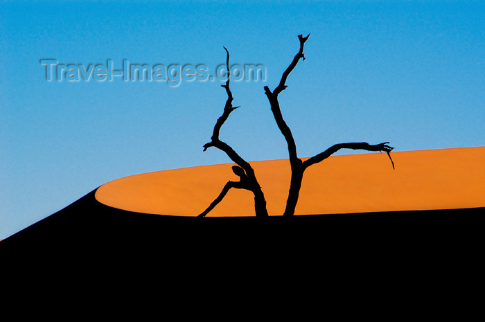 Namibia Deadvlei Silhouettedtree, orange crescent dune, Sossusvlei (photo by B.Cain)