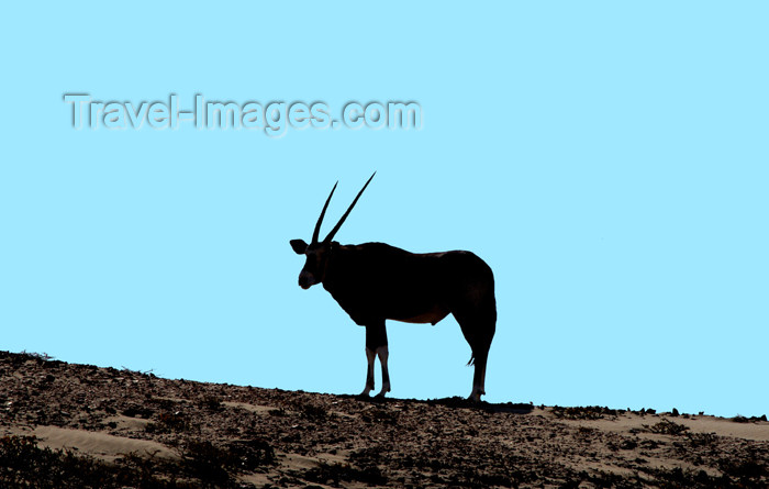 Namibia Oryx in Silhouette,Skeleton Coast (photo by B.Cain)