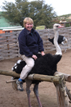 South Africa - Riding an ostrich, Oudtshoorn - photo by B.Cain