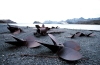 South Georgia Island - Stromness: discarded propellers from the derelict whaling station (photo by R.Eime)