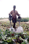 Lomé, Région Maritime, Togo: market gardener watering the plants - photo by J.Filshie