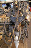 Lomé, Togo: Juju market - skulls and horns - all kinds of bizarre animal parts are used by local witches and traditional doctors - world's biggest fetish market - Marché des Fetiches Akodessewa - photo by G.Frysinger