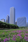 Chicago, Illinois, USA: skyscrapers backdrop a field of purple wildflowers in Grant Park - downtown - One and Two Prudential Plaza, Aon Center and Blue Cross and Blue Shield tower - photo by C.Lovell