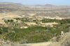 Yemen - Sana'a area - landscape with Khat trees and blooming fruit trees - photo by E.Andersen